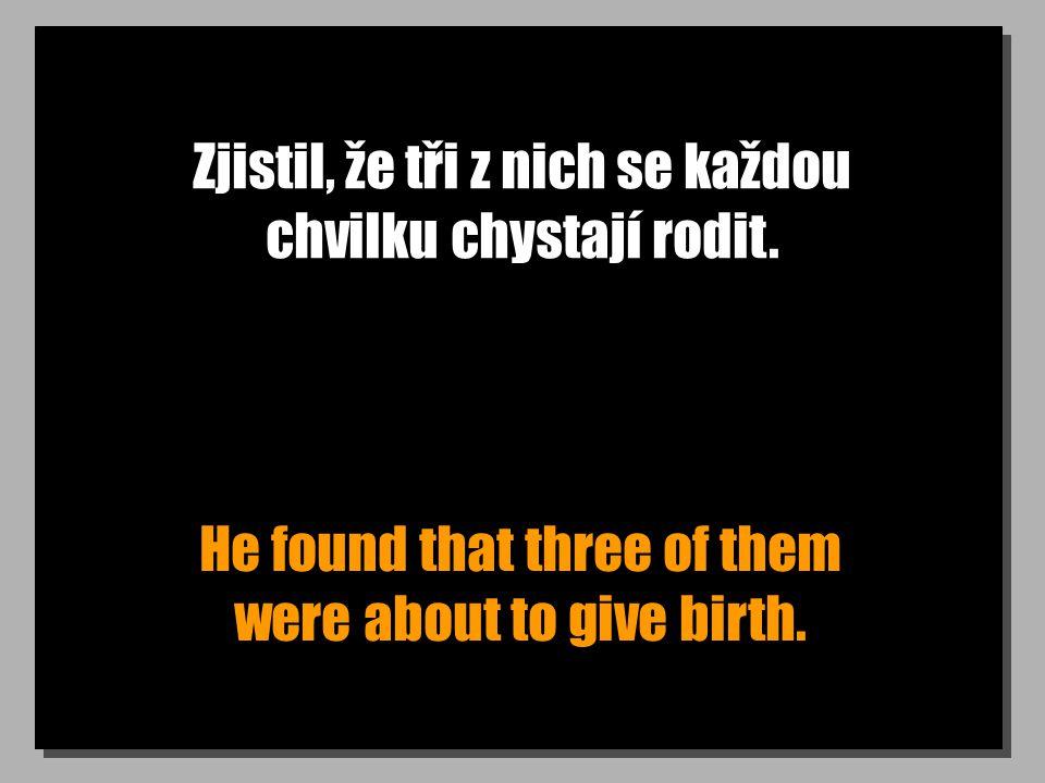 Zjistil, že tři z nich se každou chvilku chystají rodit.