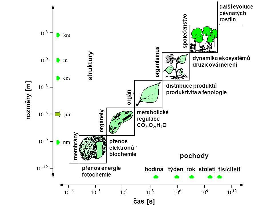 čas [s] rozměry [m] hodinatýdenrokstoletí tisíciletí přenos energie fotochemie přenos elektronů biochemie metabolické regulace CO 2,O 2,H 2 O distribuce produktů produktivita a fenologie dynamika ekosystémů družicová měření další evoluce cévnatých rostlin struktury membrány organely orgán organismus společenstvo pochody mm nm
