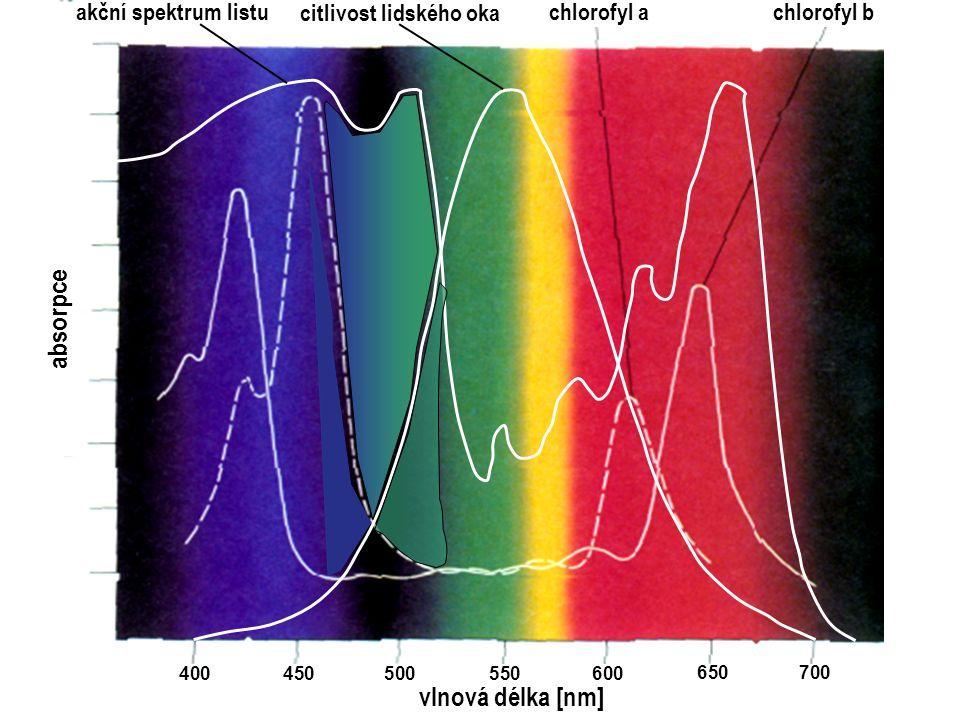 absorpce 400450500550600 650700 vlnová délka [nm] akční spektrum listu citlivost lidského oka chlorofyl a chlorofyl b