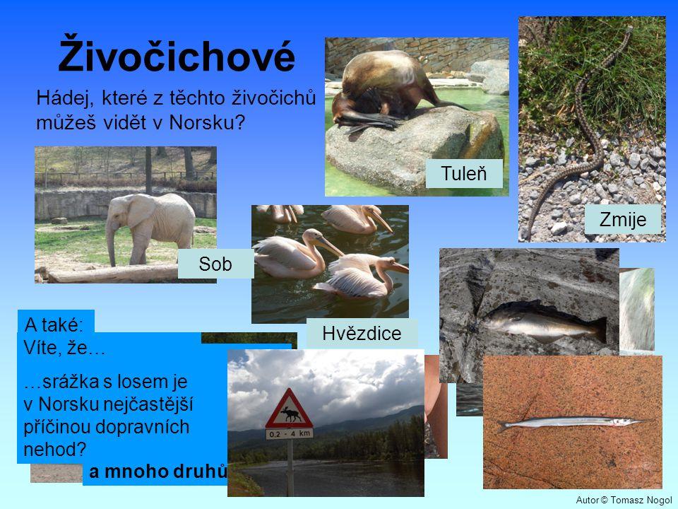 Živočichové Hádej, které z těchto živočichů můžeš vidět v Norsku? Sob Tuleň Zmije Hvězdice A také: polární liška medvěd los rosomák pižmoň a mnoho dru