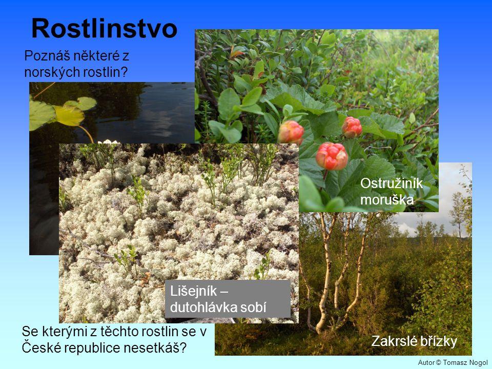 Rostlinstvo Zakrslé břízky Lekníny Ostružiník moruška Lišejník – dutohlávka sobí Poznáš některé z norských rostlin? Se kterými z těchto rostlin se v Č
