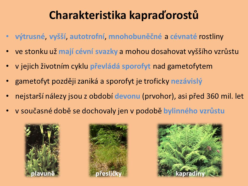 Charakteristika kapraďorostů výtrusné, vyšší, autotrofní, mnohobuněčné a cévnaté rostliny ve stonku už mají cévní svazky a mohou dosahovat vyššího vzr