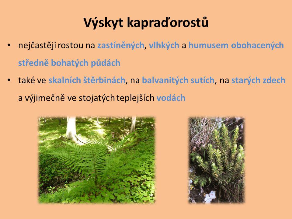 Výskyt kapraďorostů nejčastěji rostou na zastíněných, vlhkých a humusem obohacených středně bohatých půdách také ve skalních štěrbinách, na balvanitýc