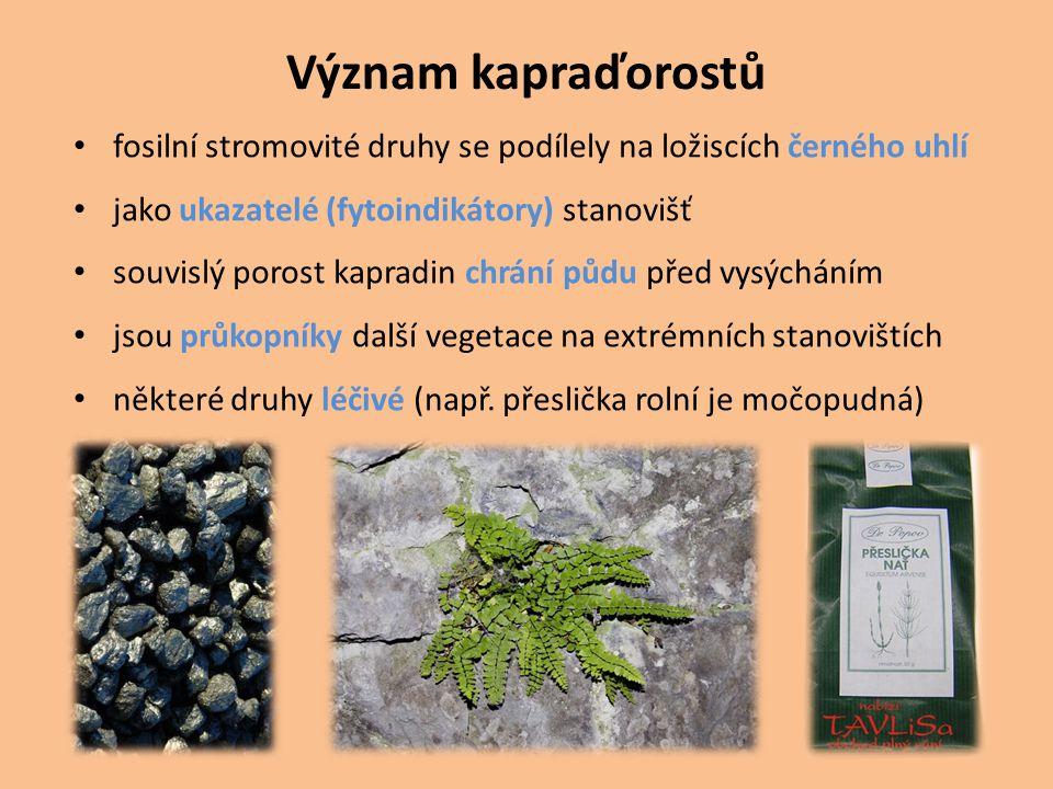 Význam kapraďorostů fosilní stromovité druhy se podílely na ložiscích černého uhlí jako ukazatelé (fytoindikátory) stanovišť souvislý porost kapradin