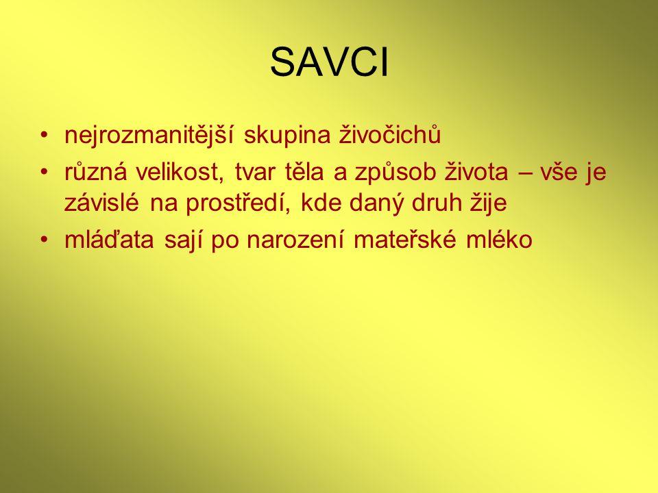 SAVCI - zdroje PARKER,S.,HEROLDOVÁ,M.,ZEJDA,J.(translation).