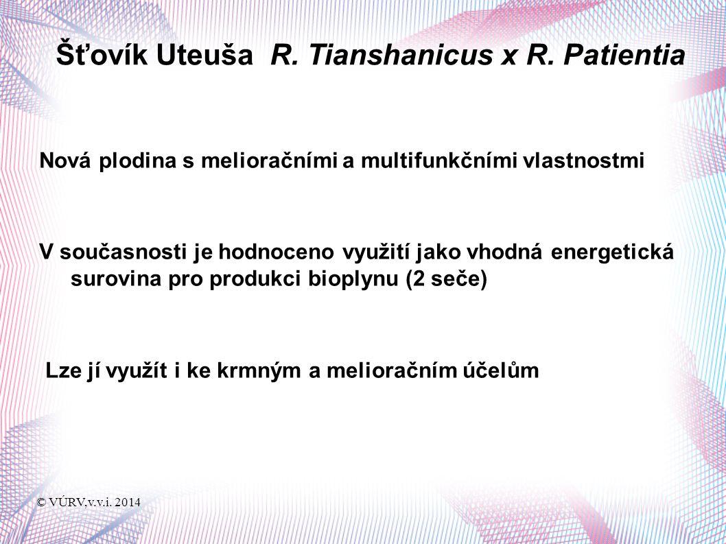 © VÚRV,v.v.i. 2014 Šťovík Uteuša R. Tianshanicus x R.