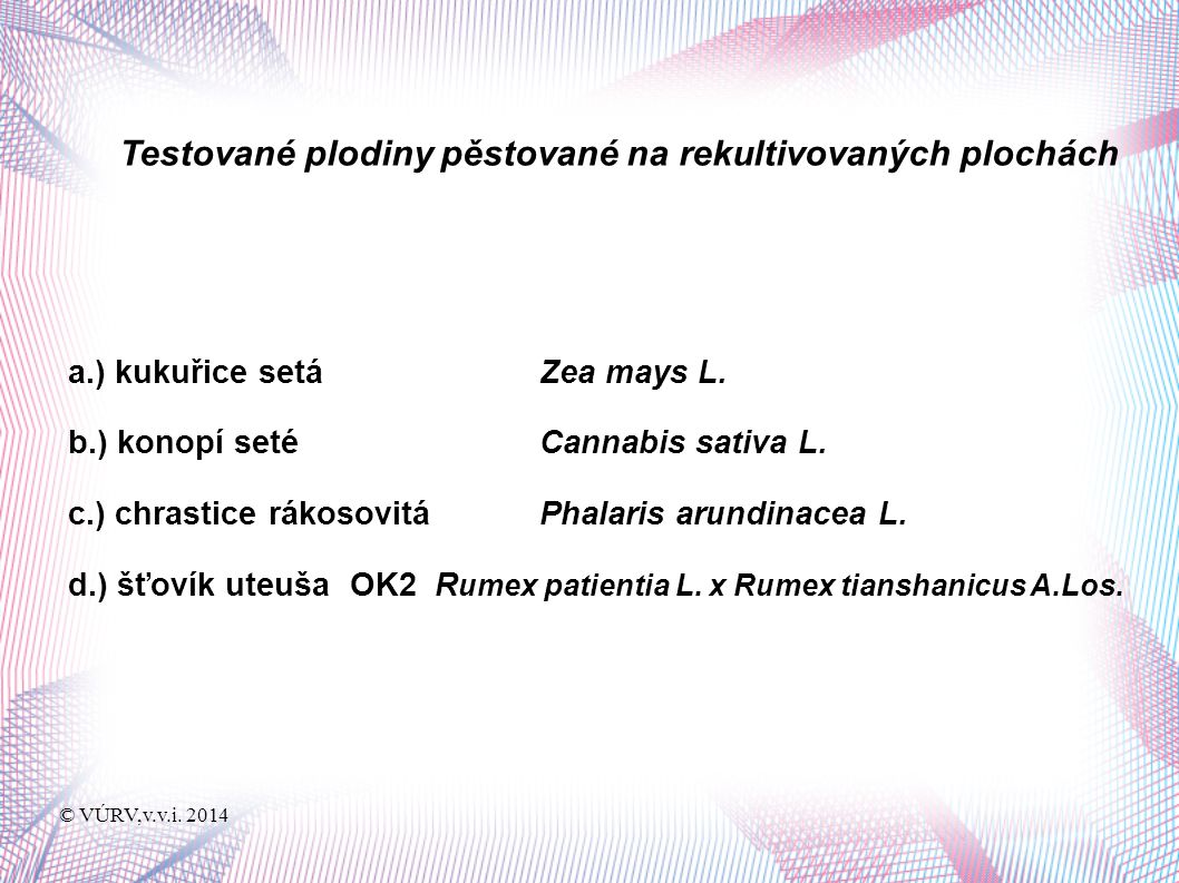 © VÚRV,v.v.i.2014 Kukuřice setá - Zea mays L.