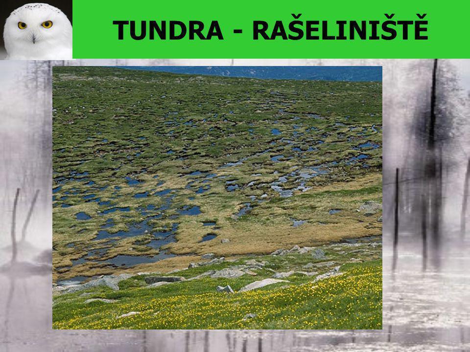 TUNDRA - RAŠELINIŠTĚ