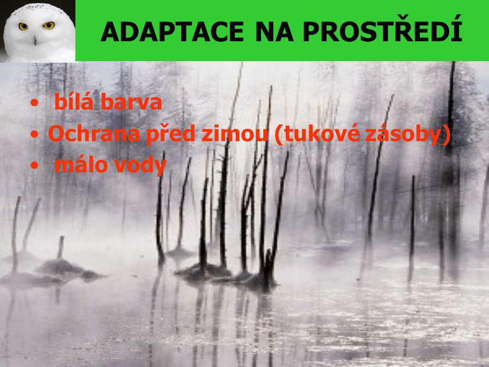 ADAPTACE NA PROSTŘEDÍ bílá barva Ochrana před zimou (tukové zásoby) málo vody