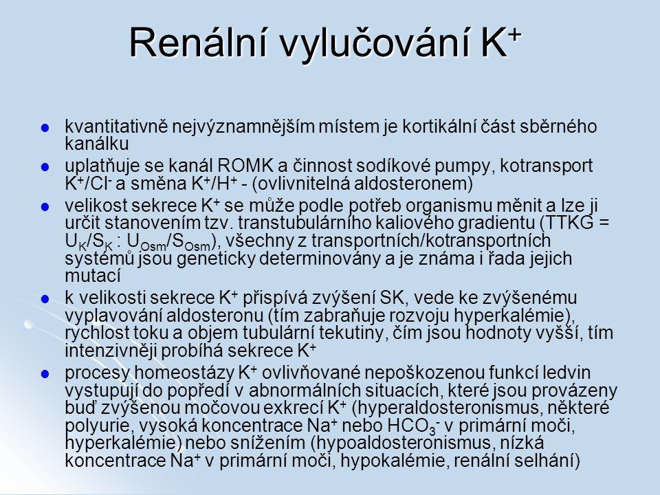 Renální vylučování K + kvantitativně nejvýznamnějším místem je kortikální část sběrného kanálku uplatňuje se kanál ROMK a činnost sodíkové pumpy, kotransport K + /Cl - a směna K + /H + - (ovlivnitelná aldosteronem) velikost sekrece K + se může podle potřeb organismu měnit a lze ji určit stanovením tzv.