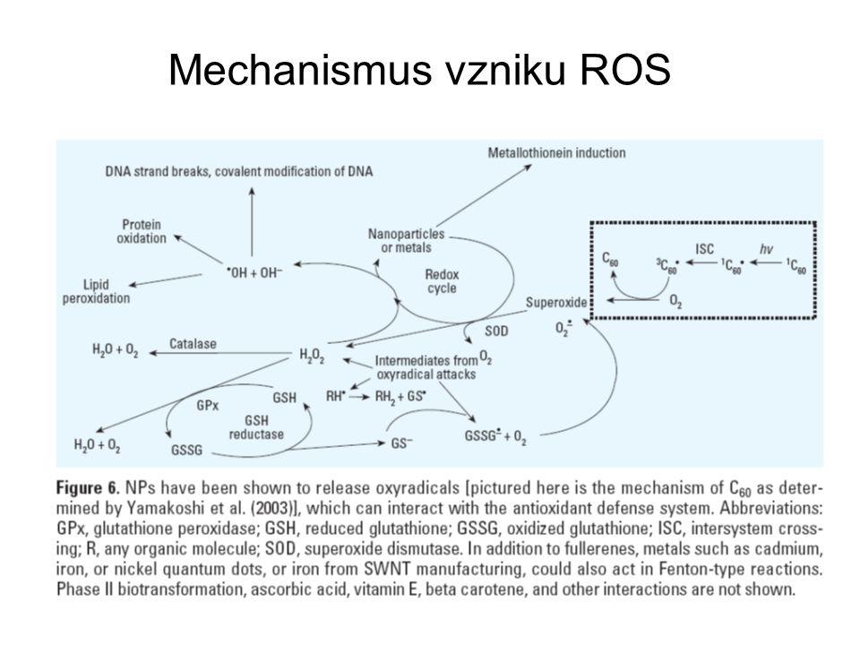 Toxikologie nanočástic (místa vstupu – dýchací systém) matematický model depozice NSPs v dýchacích cestách (mechanismus – difúze)  distribuce inhalovaných inertních NSPs do vnitřních orgánů –transcytóza přes buňky epitelu do krve –příjem nervovými zakončeními a axonální translokace do ganglií a CNS fagocytóza NSPs makrofágy je málo účinná