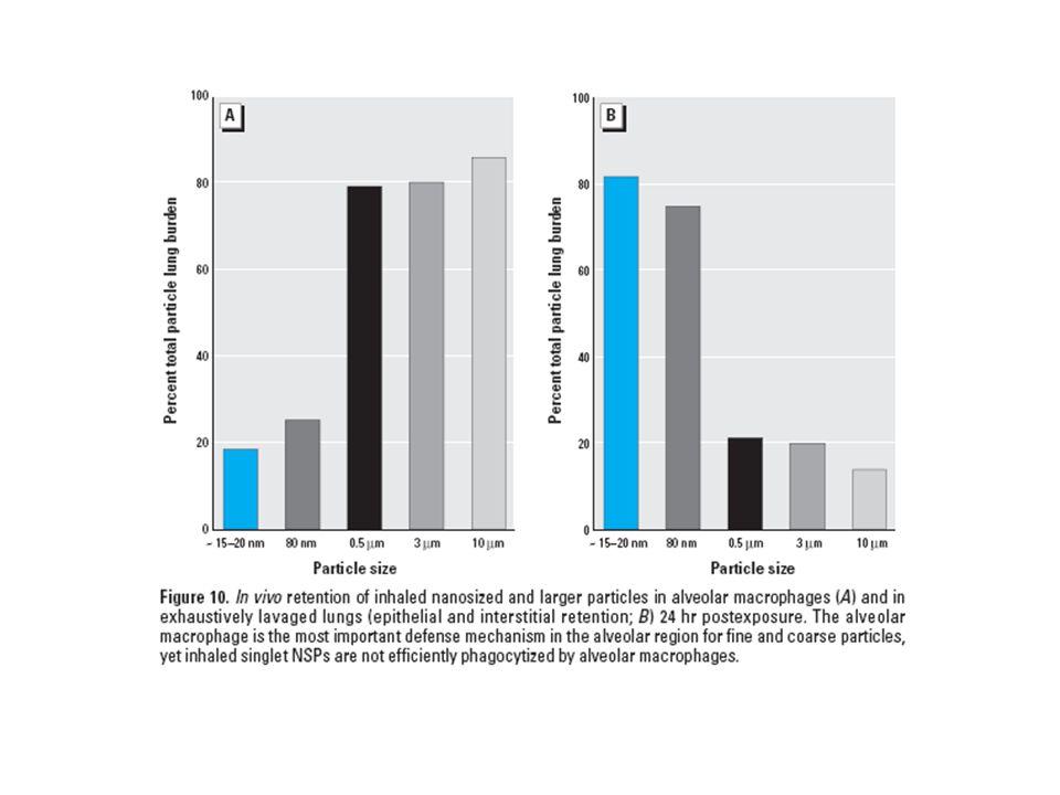 Toxikologie nanočástic (místa vstupu – dýchací systém) povrchová úprava NSPs (např.
