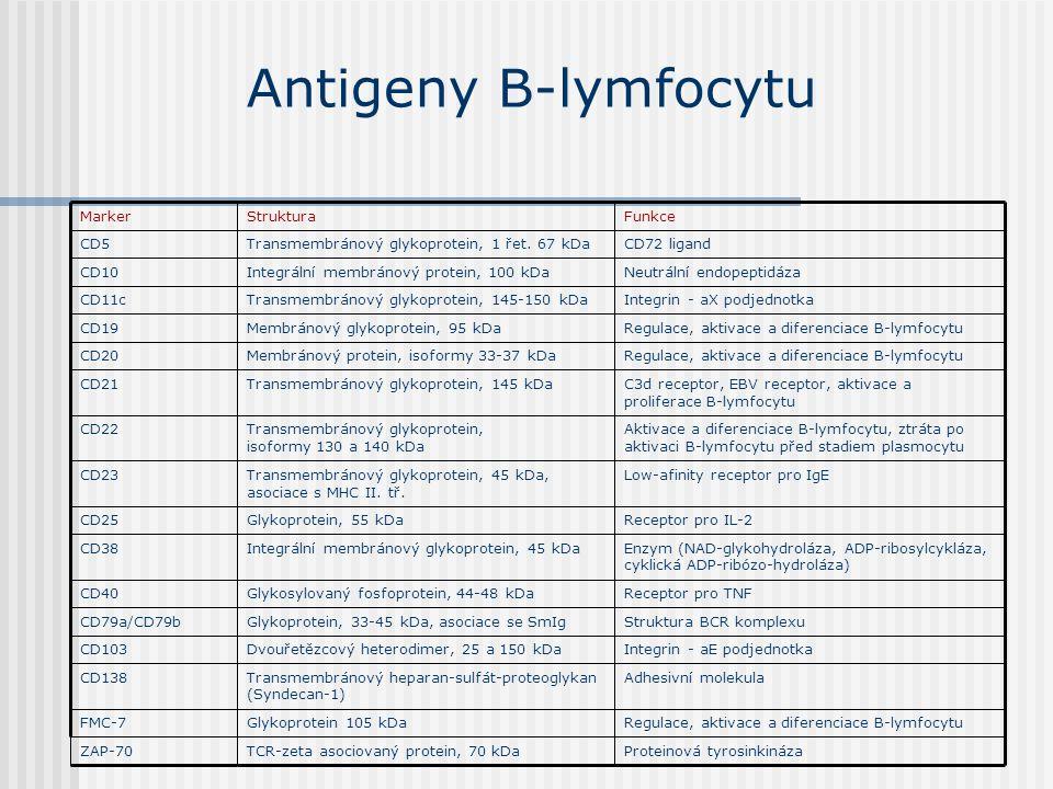 Antigeny B-lymfocytu Proteinová tyrosinkinázaTCR-zeta asociovaný protein, 70 kDaZAP-70 Regulace, aktivace a diferenciace B-lymfocytuGlykoprotein 105 k