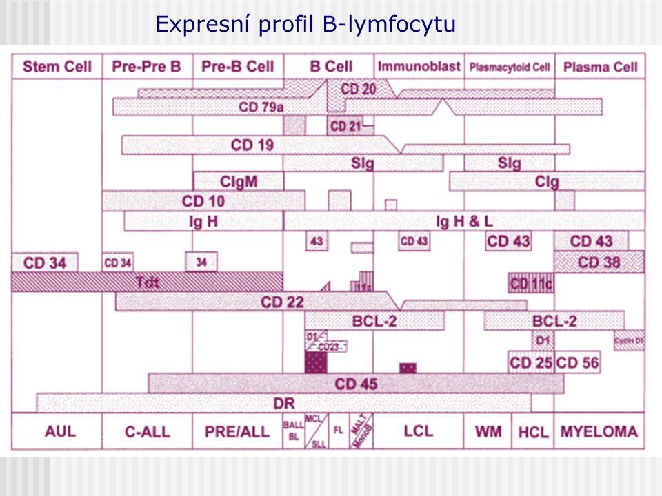Expresní profil B-lymfocytu