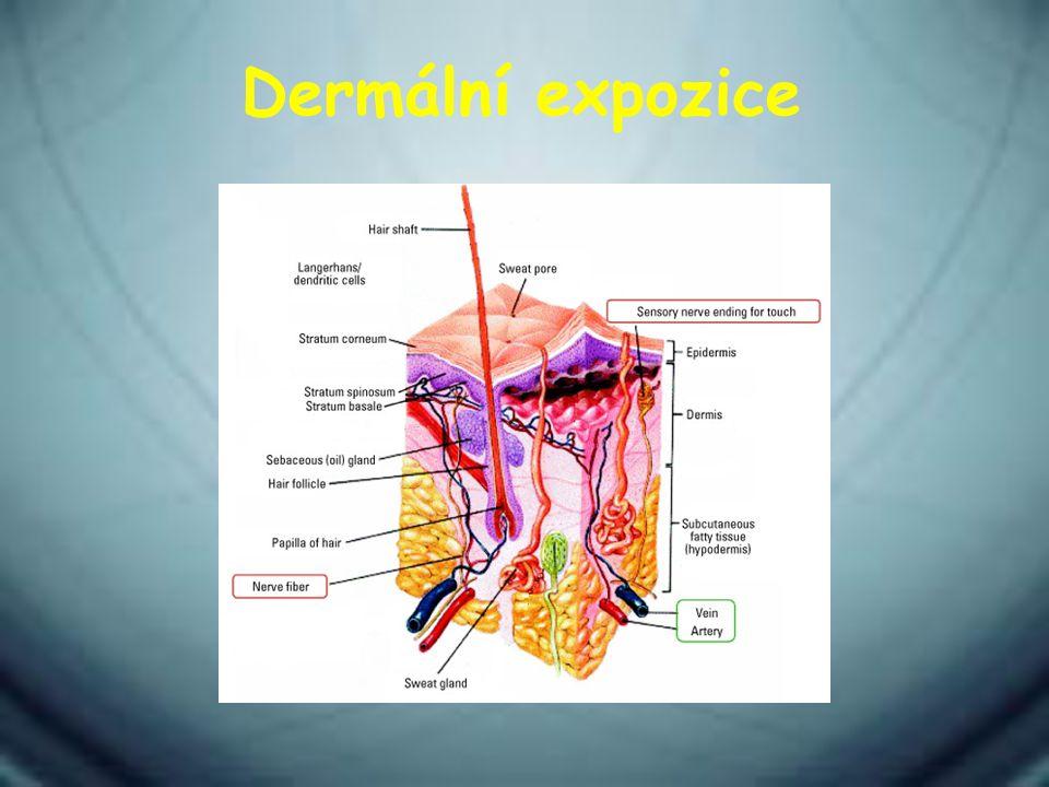 Dermální expozice