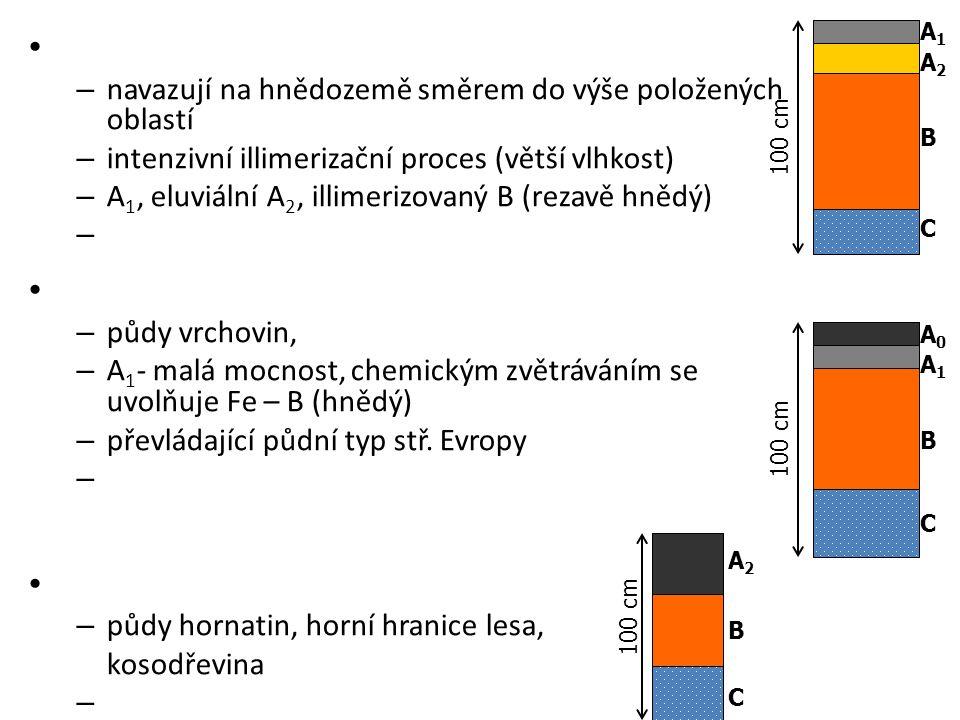– navazují na hnědozemě směrem do výše položených oblastí – intenzivní illimerizační proces (větší vlhkost) – A 1, eluviální A 2, illimerizovaný B (re