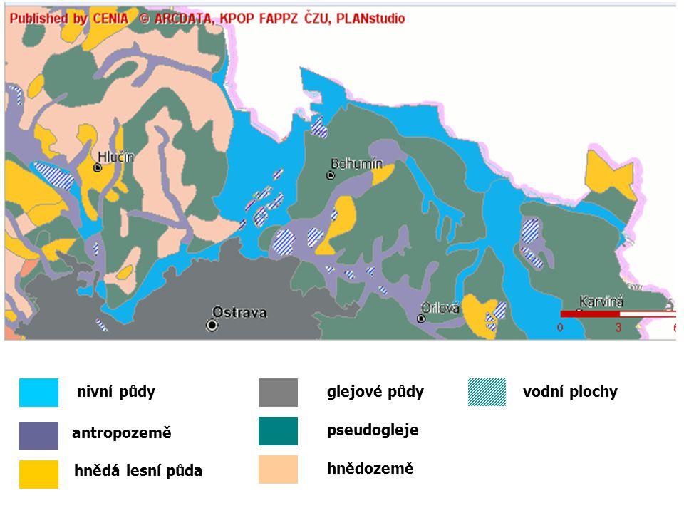 glejové půdynivní půdy antropozemě hnědá lesní půda hnědozemě vodní plochy pseudogleje