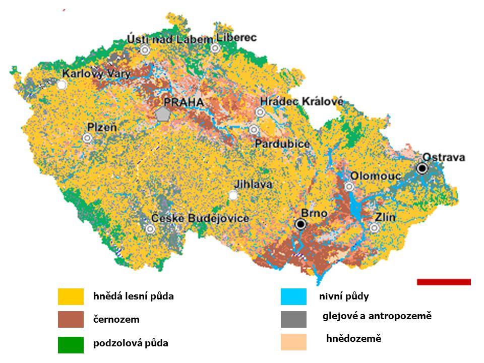 hnědá lesní půda černozem podzolová půda nivní půdy glejové a antropozemě hnědozemě