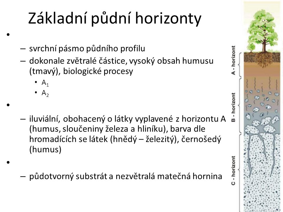 Základní půdní horizonty – svrchní pásmo půdního profilu – dokonale zvětralé částice, vysoký obsah humusu (tmavý), biologické procesy A 1 A 2 – iluviální, obohacený o látky vyplavené z horizontu A (humus, sloučeniny železa a hliníku), barva dle hromadících se látek (hnědý – železitý), černošedý (humus) – půdotvorný substrát a nezvětralá matečná hornina