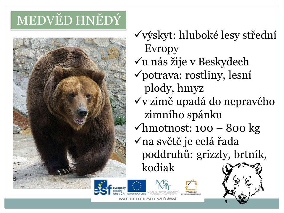 MEDVĚD HNĚDÝ výskyt: hluboké lesy střední Evropy u nás žije v Beskydech potrava: rostliny, lesní plody, hmyz v zimě upadá do nepravého zimního spánku hmotnost: 100 – 800 kg na světě je celá řada poddruhů: grizzly, brtník, kodiak