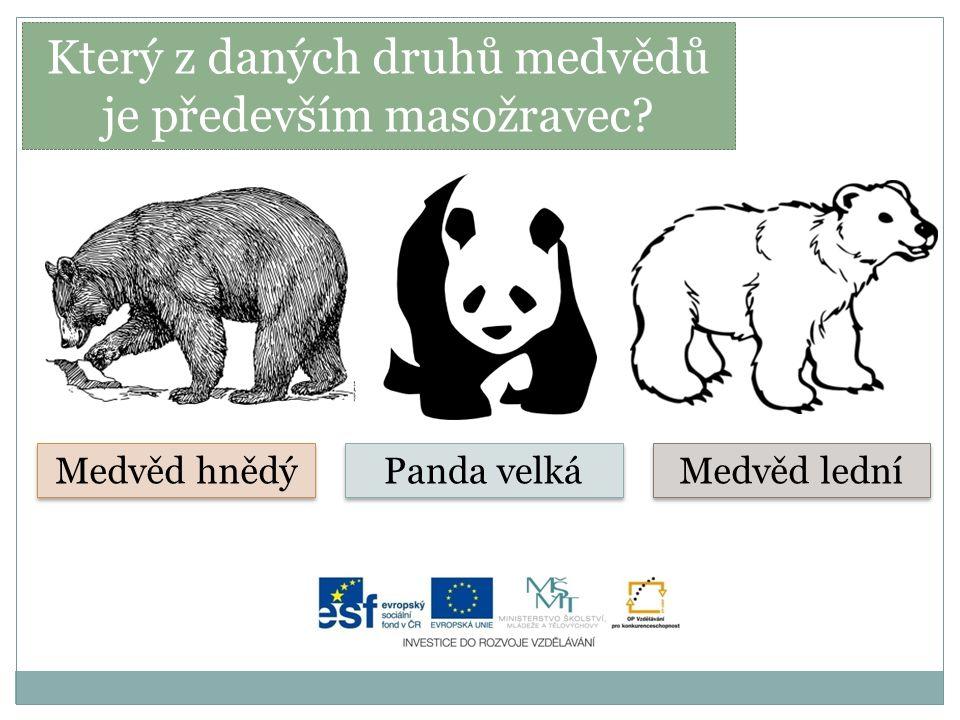 Který z daných druhů medvědů je především masožravec? Medvěd hnědý Panda velká Medvěd lední