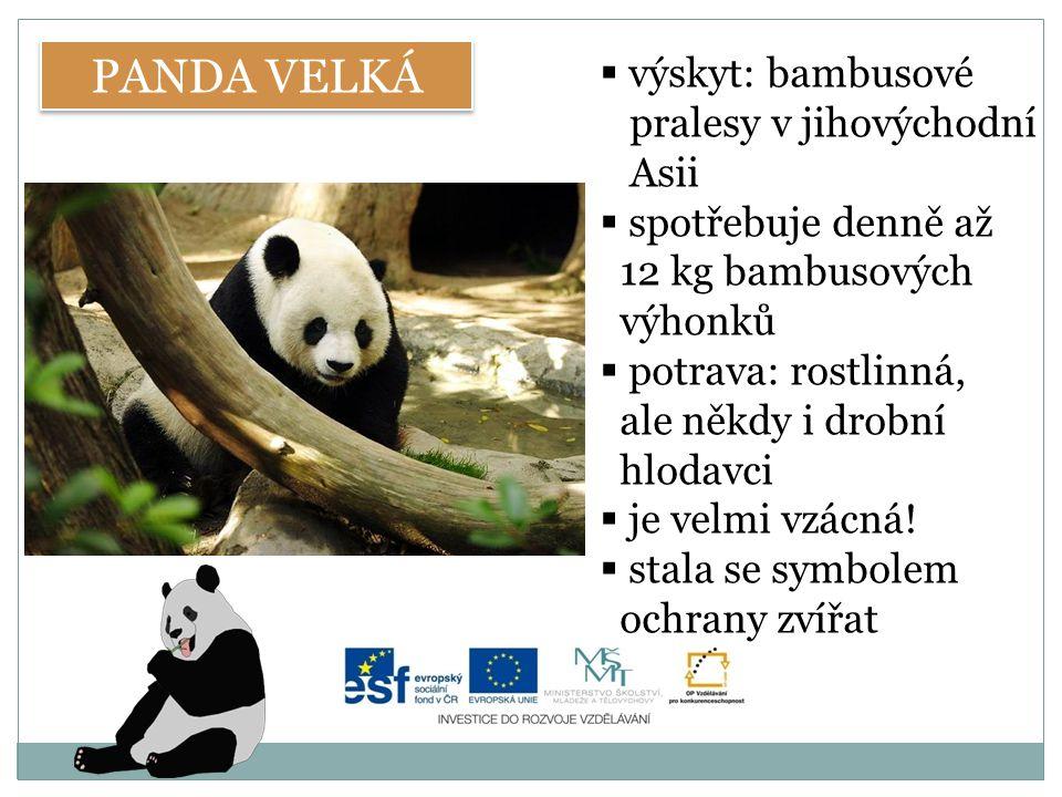 PANDA VELKÁ  výskyt: bambusové pralesy v jihovýchodní Asii  spotřebuje denně až 12 kg bambusových výhonků  potrava: rostlinná, ale někdy i drobní hlodavci  je velmi vzácná.