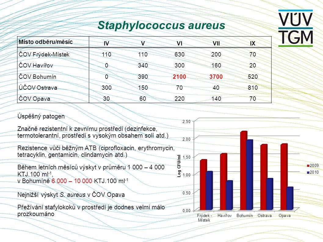 Staphylococcus aureus Úspěšný patogen Značně rezistentní k zevnímu prostředí (dezinfekce, termotolerantní, prostředí s vysokým obsahem solí atd.) Rezi