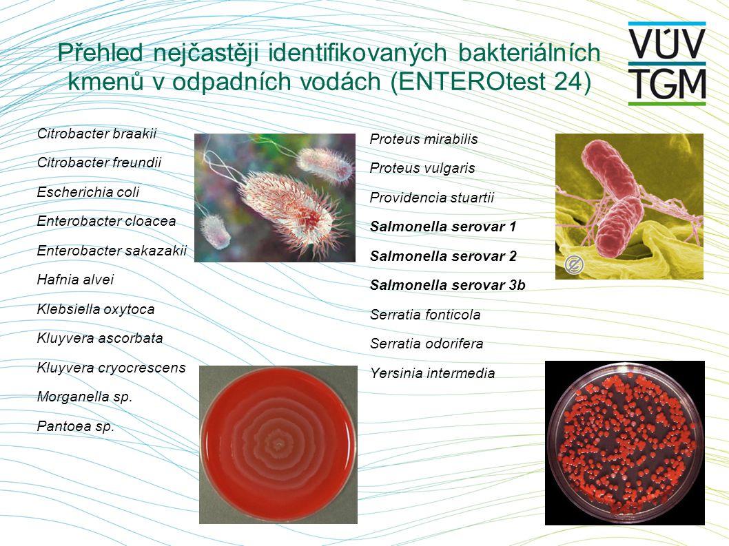 Přehled nejčastěji identifikovaných bakteriálních kmenů v odpadních vodách (ENTEROtest 24) Citrobacter braakii Citrobacter freundii Escherichia coli E