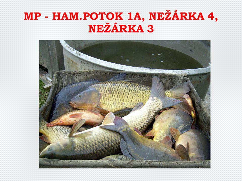 MP - HAM.POTOK 1A, NEŽÁRKA 4, NEŽÁRKA 3
