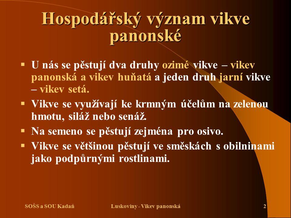 SOŠS a SOU KadaňLuskoviny - Vikev panonská3 Biologická charakteristika vikve panonské  Je to jednoletá rostlina.
