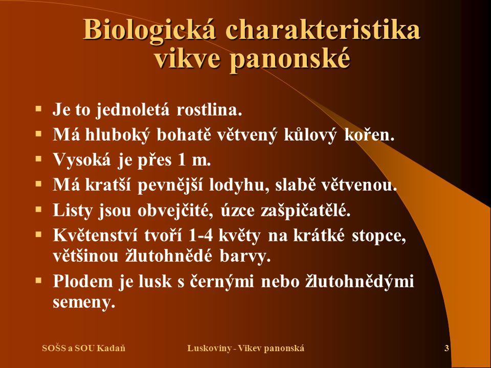 SOŠS a SOU KadaňLuskoviny - Vikev panonská3 Biologická charakteristika vikve panonské  Je to jednoletá rostlina.  Má hluboký bohatě větvený kůlový k