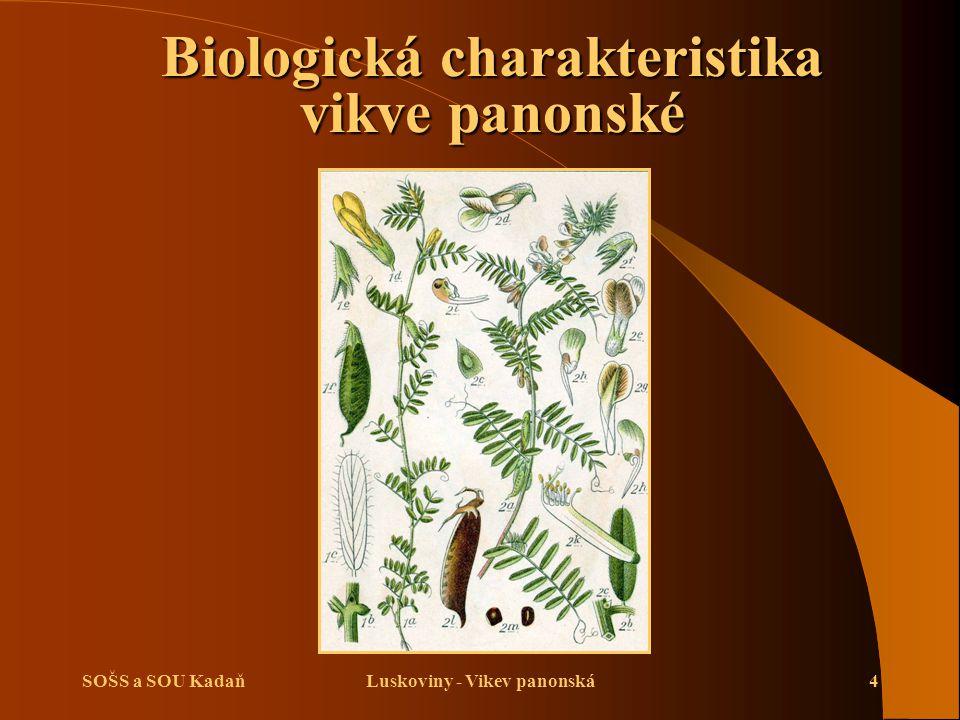 SOŠS a SOU KadaňLuskoviny - Vikev panonská5 Biologická charakteristika vikve panonské