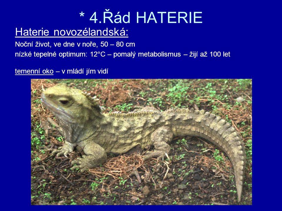 * 4.Řád HATERIE Haterie novozélandská: Noční život, ve dne v noře, 50 – 80 cm nízké tepelné optimum: 12°C – pomalý metabolismus – žijí až 100 let temenní oko – v mládí jím vidí