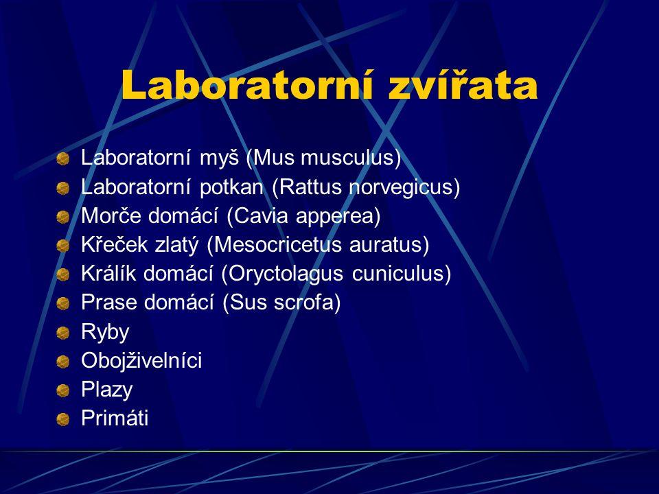 Laboratorní zvířata Laboratorní myš (Mus musculus) Laboratorní potkan (Rattus norvegicus) Morče domácí (Cavia apperea) Křeček zlatý (Mesocricetus aura