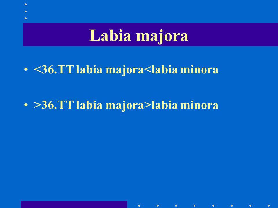 Labia majora <36.TT labia majora<labia minora >36.TT labia majora>labia minora
