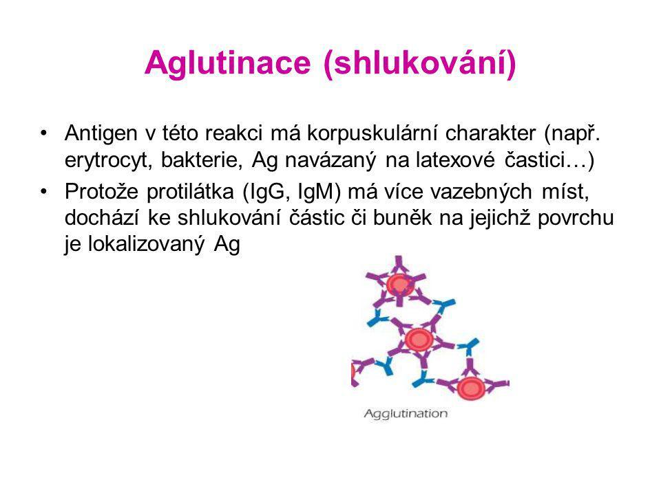 Aglutinace (shlukování) Antigen v této reakci má korpuskulární charakter (např.