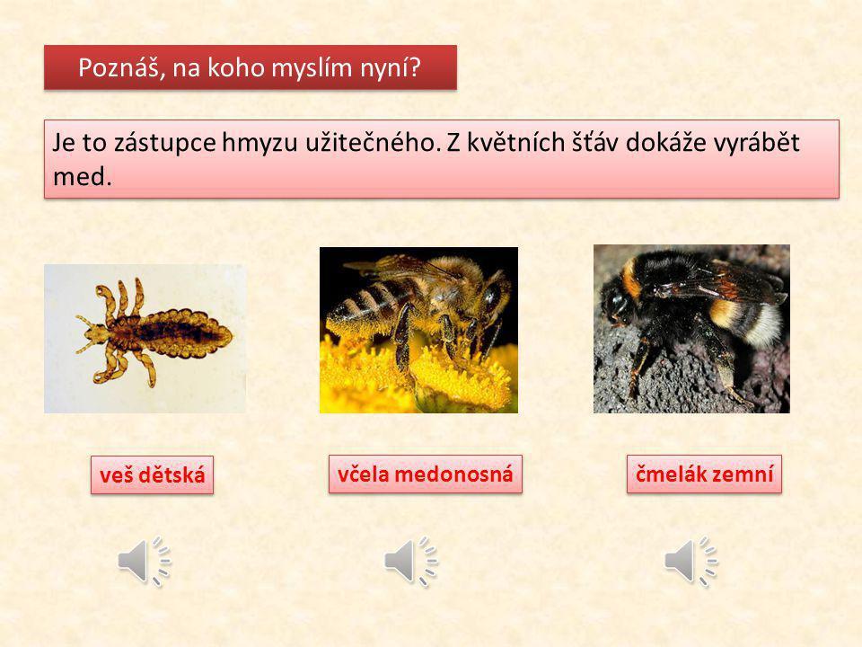 Poznáš, na koho myslím? Je to hmyz obtížný, žije ve vlhkých oblastech. Samička klade vajíčka přímo do vody, kde se vyvíjí larvy. Krev člověka saje po
