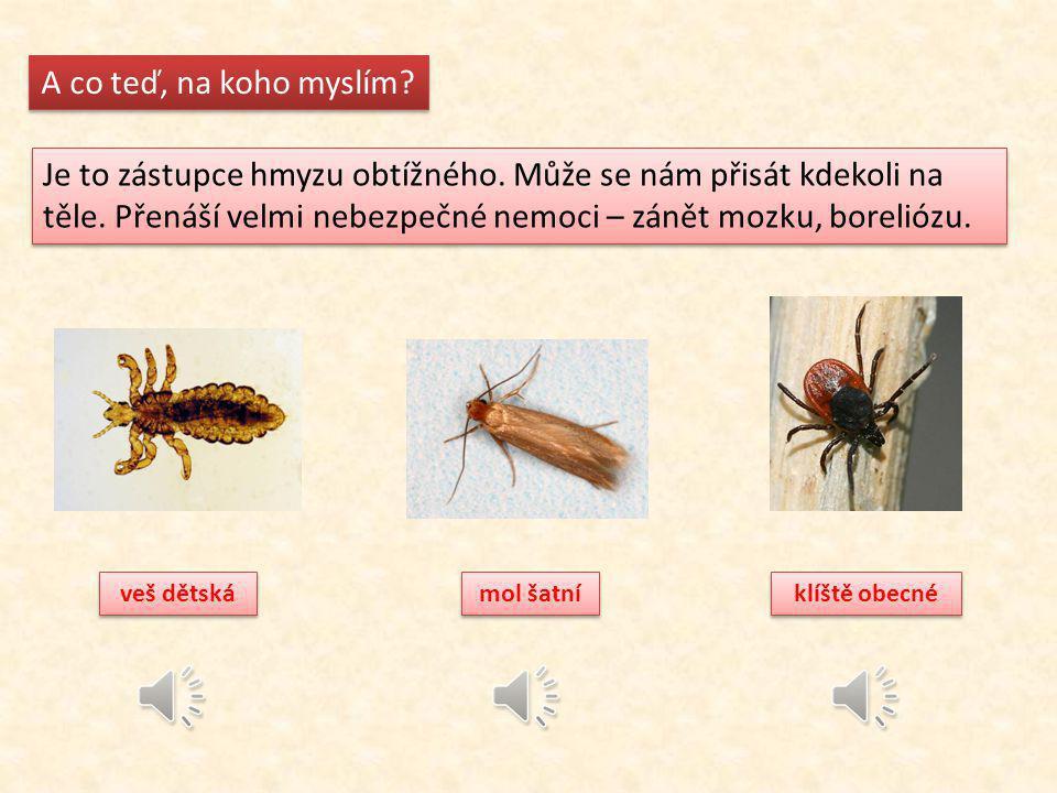 Poznáš, na koho myslím nyní.Je to zástupce hmyzu užitečného.