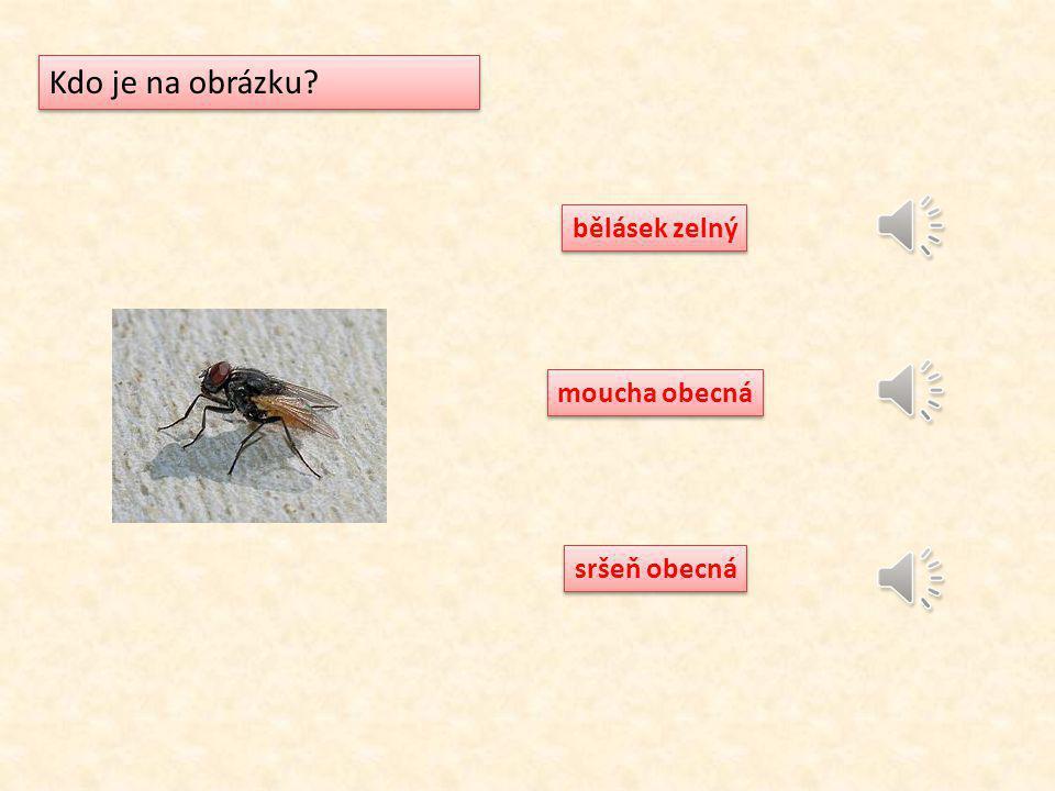 mravenec lesní vosa obecná kůrovec smrkový Kdo je na obrázku?