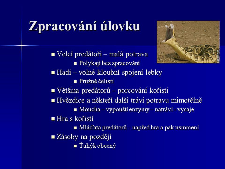 Zpracování úlovku Velcí predátoři – malá potrava Velcí predátoři – malá potrava Polykají bez zpracování Polykají bez zpracování Hadi – volné kloubní s