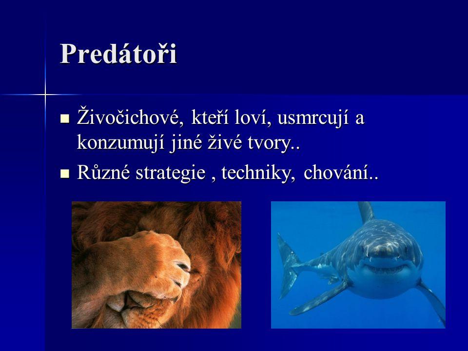 Predátoři Živočichové, kteří loví, usmrcují a konzumují jiné živé tvory.. Živočichové, kteří loví, usmrcují a konzumují jiné živé tvory.. Různé strate