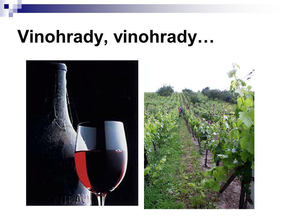 Vinohrady, vinohrady…