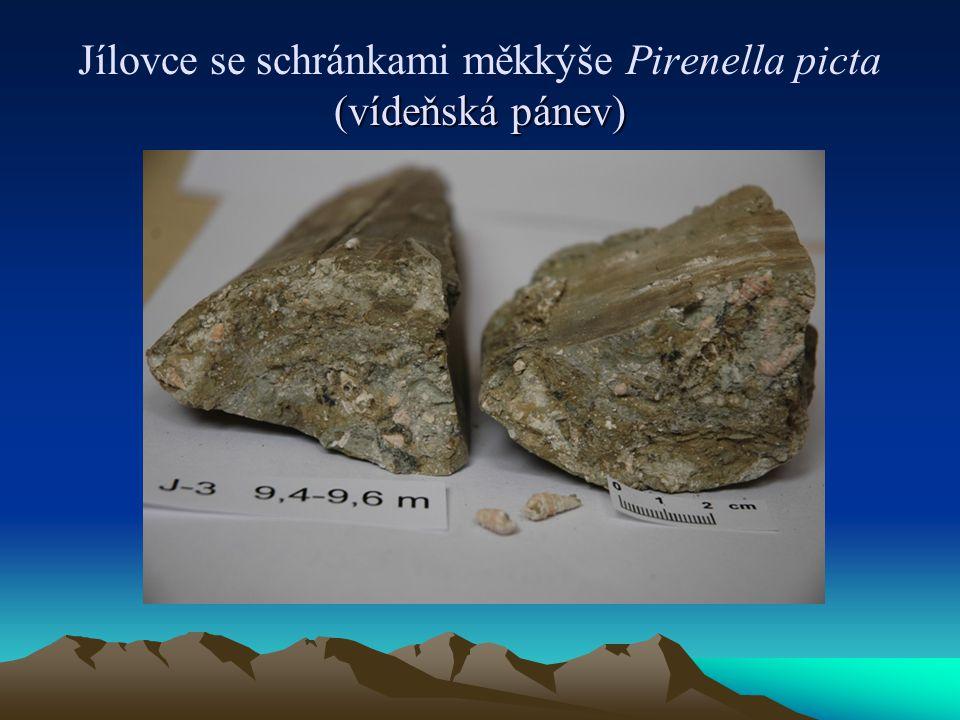(vídeňská pánev) Jílovce se schránkami měkkýše Pirenella picta (vídeňská pánev)
