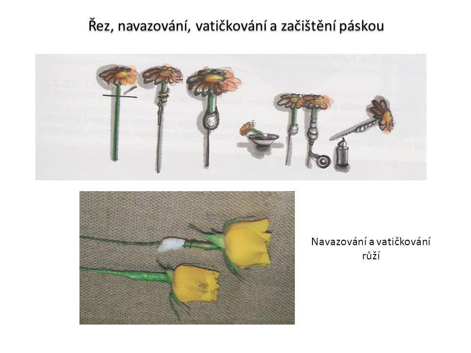 Řez, navazování, vatičkování a začištění páskou Navazování a vatičkování růží