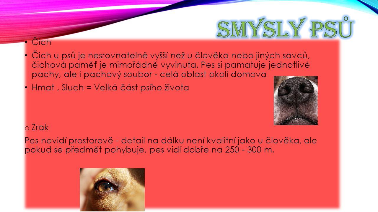Čich Čich u psů je nesrovnatelně vyšší než u člověka nebo jiných savců, čichová paměť je mimořádně vyvinuta. Pes si pamatuje jednotlivé pachy, ale i p