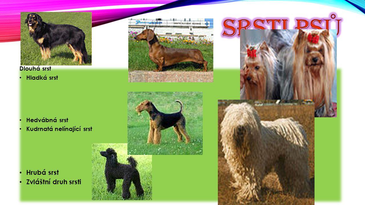 Psi se dělí do skupin: a) ovčáčtí honáčtí a pastevečtí psi b) pinčové,knírači, molosoidní a švýcarští psi c) teriéři d) jezevčíci e) špicové f) honiči, barváři g) ohaři h) retvívři ch) společenská plemena i) chrti