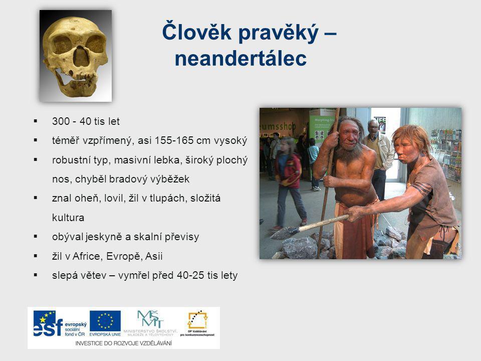 Člověk pravěký – neandertálec  300 - 40 tis let  téměř vzpřímený, asi 155-165 cm vysoký  robustní typ, masivní lebka, široký plochý nos, chyběl bradový výběžek  znal oheň, lovil, žil v tlupách, složitá kultura  obýval jeskyně a skalní převisy  žil v Africe, Evropě, Asii  slepá větev – vymřel před 40-25 tis lety