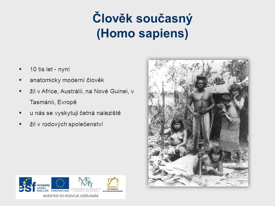 Člověk současný (Homo sapiens)  10 tis let - nyní  anatomicky moderní člověk  žil v Africe, Austrálii, na Nové Guinei, v Tasmánii, Evropě  u nás se vyskytují četná naleziště  žil v rodových společenství