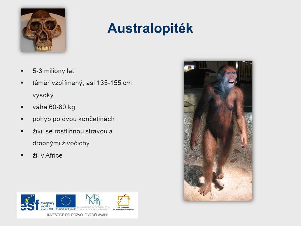Australopiték  5-3 miliony let  téměř vzpřímený, asi 135-155 cm vysoký  váha 60-80 kg  pohyb po dvou končetinách  živil se rostlinnou stravou a drobnými živočichy  žil v Africe