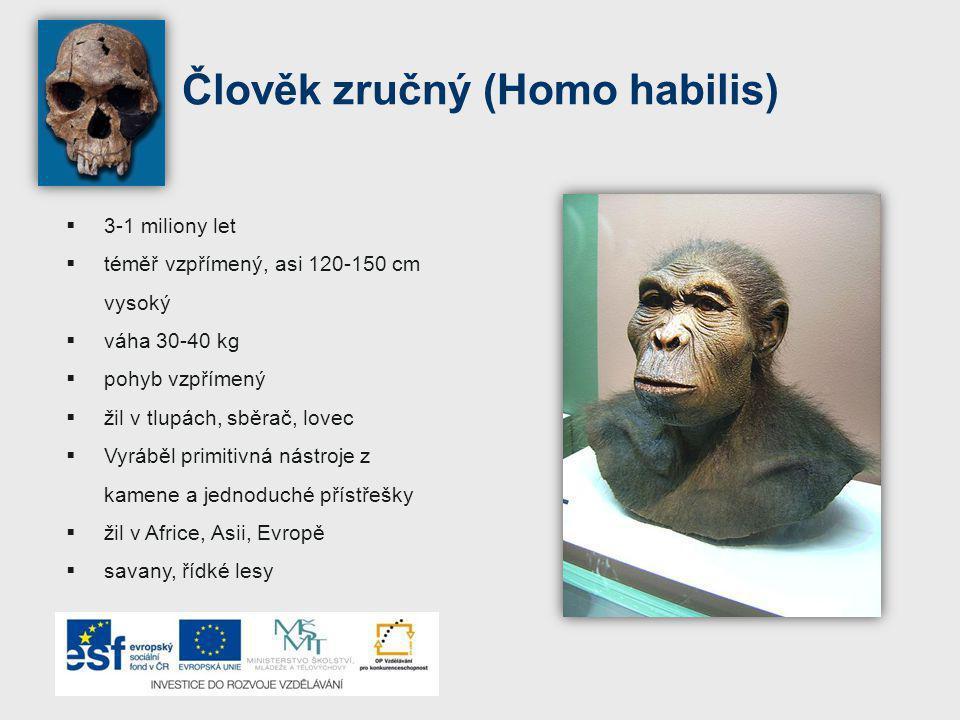 Člověk zručný (Homo habilis)  3-1 miliony let  téměř vzpřímený, asi 120-150 cm vysoký  váha 30-40 kg  pohyb vzpřímený  žil v tlupách, sběrač, lovec  Vyráběl primitivná nástroje z kamene a jednoduché přístřešky  žil v Africe, Asii, Evropě  savany, řídké lesy